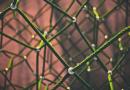 Cara Mendapatkan Backlink Berkualitas Secara Gratis