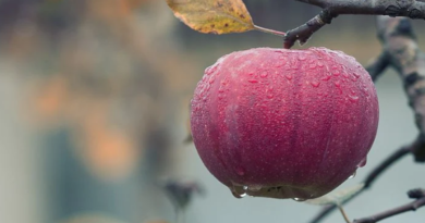 Etika dan Tata Cara Sebelum Makan dalam Islam