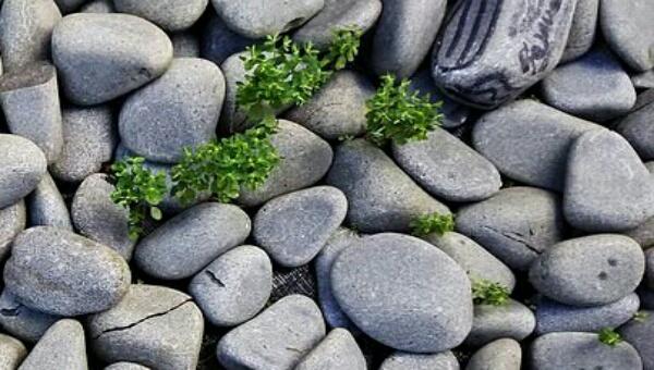 Sebuah Batu