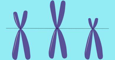 Peristiwa Mutasi Kromosom